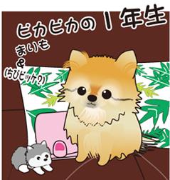 2012  5月 まりも&ちびビッケ.jpg