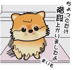 2011 5月 まり.jpg